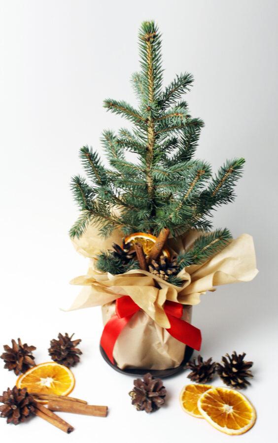 Ziemassvētku sudrabeglīte