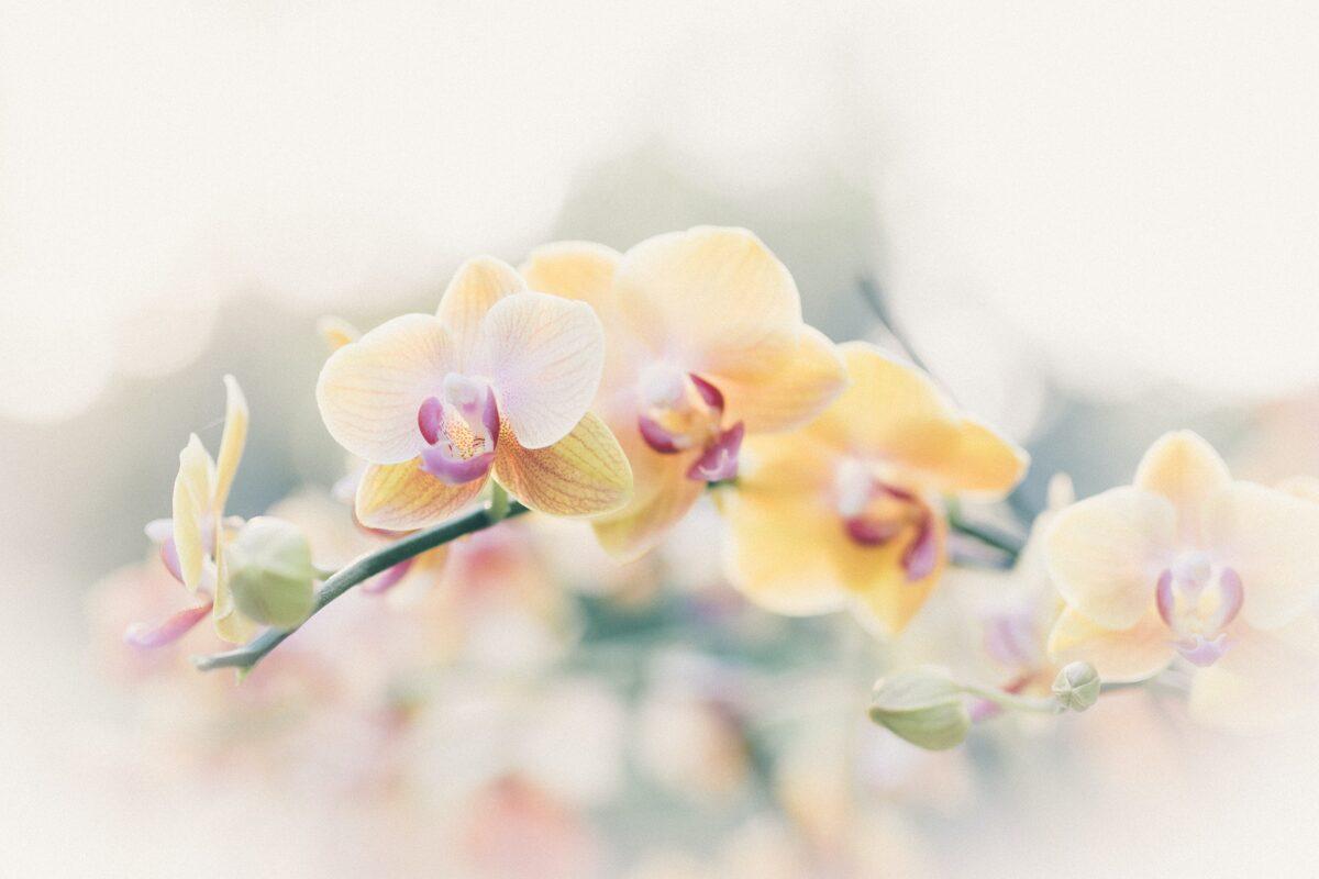 Kartiņa - Orhidejas